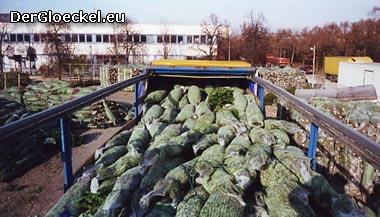 Import der Weihnachtsbäume - ein gutes Geschäft - zu welchem Preis?
