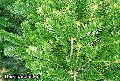 80 Stunden als Weihnachtsbaumverkäufer